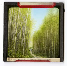 Bamboo grove and farmer