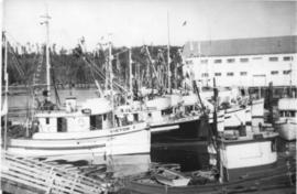 Fishing Fleet, Alert Bay, 1957