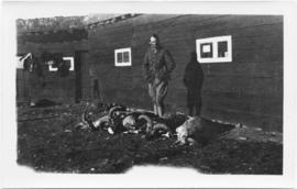 Man standing in front of three dead big horn sheep