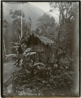 [Traditional house New Guinea]