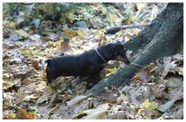 [Dog in forest]