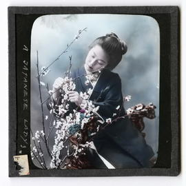 Woman tending cherry blossoms