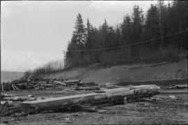 Norman Tait's first view of log at the L&K Log-sorting yard in Gibson's Landing, B.C.