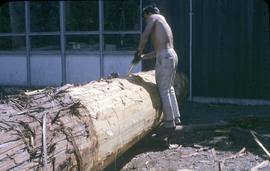 Removing bark from a tree