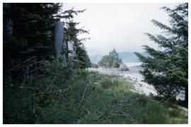 Ninstints 1957 [shoreline seen from forest]