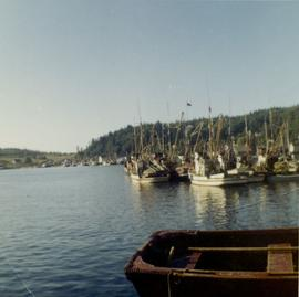 Docked fishing boats