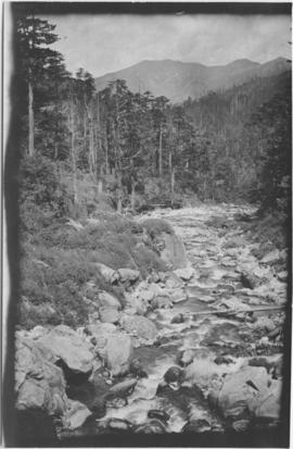 Photo of a stream
