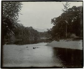 Upper Mimika [River] seen from camp at Par[___?]