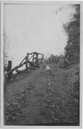 Photo of a dog on a path