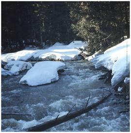 Snowy creek in forest