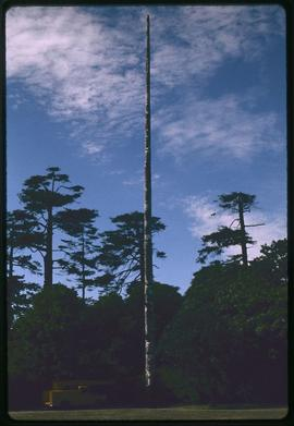 World's tallest totem pole, carved by Mungo Martin, Beacon Hill Park, Victoria, B.C.