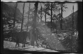 [Unidentified person with horse]