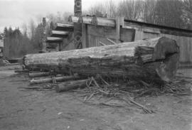 [Wide shot of partially stripped log]