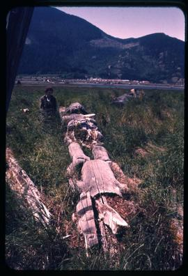Old totem poles in grass [Haida Gwaii?]