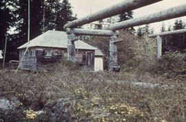 Old longhouse poles, featuring Huxwhukw
