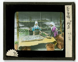 Two women working on silk worms